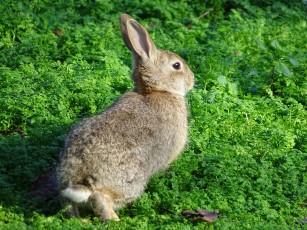 rabbit-1283211_1920